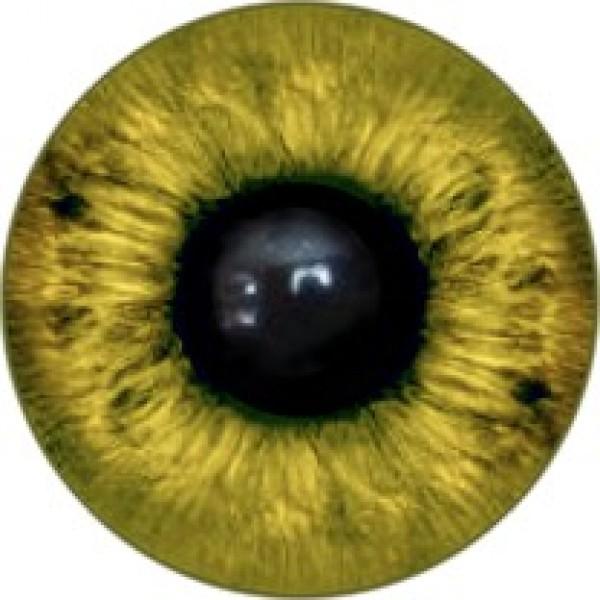 Глазки  12 мм,на петельке